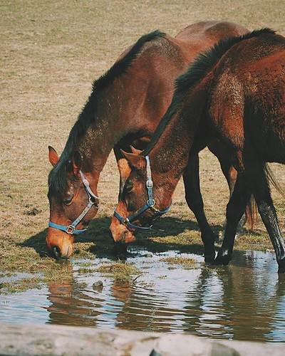 Sharing is Caring 🐎