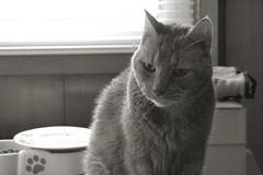 feline renal failure