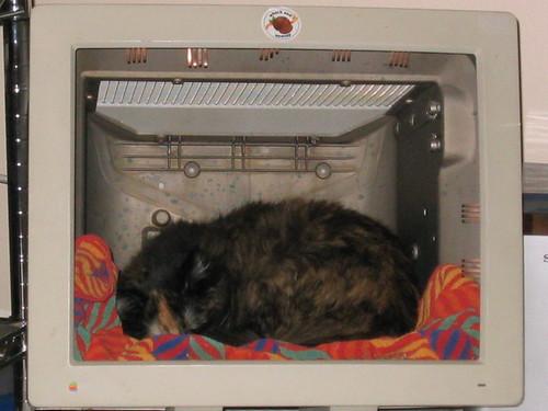 Harley Cat Monitor