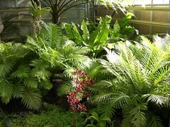 Balinesischer Garten (Jolli) Tags: marzahn freizeitpark