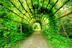 plant tunnel - by extranoise