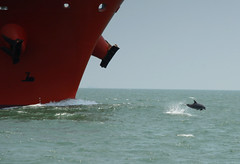 Ship and Porpoise (OneEighteen) Tags: sea port harbor marine ship dolphin houston pilot porpoise i500 nikonstunninggallery