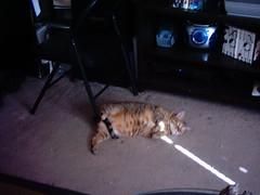 IMAG0108_0091 (amydoll1477) Tags: cats teaser
