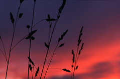 Sunset Grass (Chesil) Tags: sunset skyscape landscape fcsetsrises
