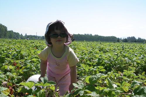 théa dans un champ de fraises