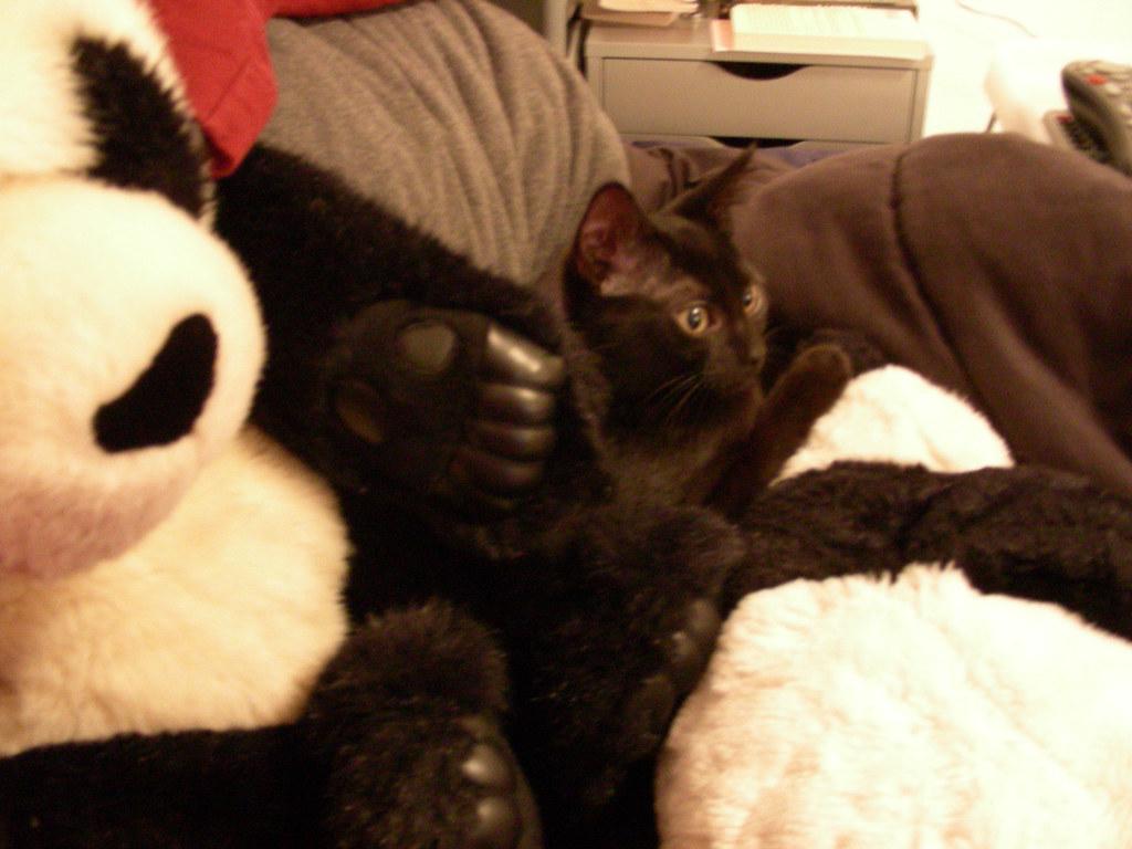 [2006.07.05] Widget with Pandas