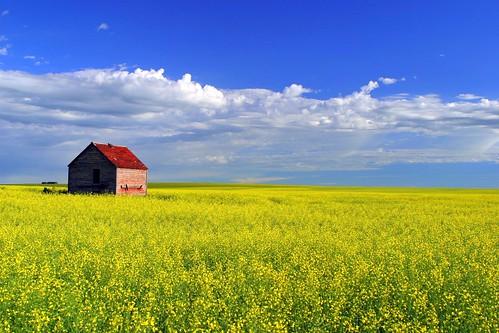 Alberta Iconicliche #2