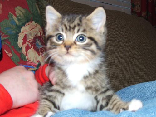 sadness kitty