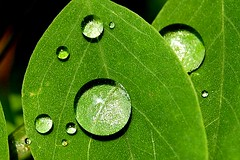 After the rain (tktodd) Tags: macro nature water rain drops bubbles dew gtaggroup goddaym1