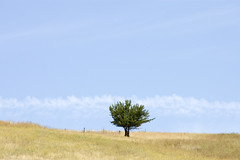 Tree (bentilden) Tags: blue sky usa color tree field fence washington alone pentax farm colfax palouse istdl