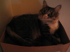 Unica in her favorite perch (joel_fleminger) Tags: cats unica