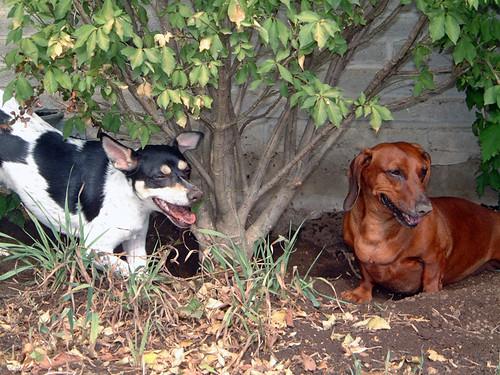 2003-08-29 - Ralphie&PeedeeDigging-0027