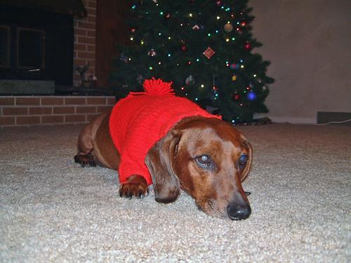 2006-01-09 - RalphieSweater-0011