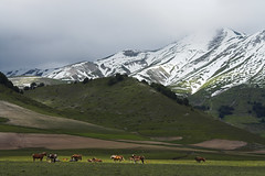 Grazing Horses (Stephen P. Johnson) Tags: park horses italy snow mountains wow national cai spoleto umbria sibillini spectacularlandscape specland