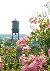 Richmond (chiavatti) Tags: flower tower water apartments hill watertower 2006 richmond crepe overlook richmondvirginia crepemyrtle chiavatti