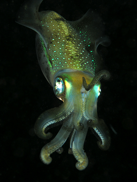 squid picture by Flickr user Nick Hobgood, used under a Creative Commons Attribution 2.0 Generic license