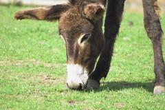 donkey 2-01 (ChrisBrookesPhotography.co.uk) Tags: uk chris photography brookes scoopt cbrookes75 chrisbrookes
