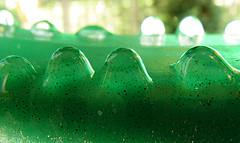 Inverted Green Raindrops (smartsetpix) Tags: green water droplets upsidedown raindrops