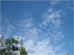 sky 8.12.16 (b. inxee) Tags: agriculture chiangmai cloud sky