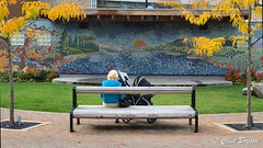 The mural at the Ross Street bandstand (126) (clive_bryson) Tags: trees canada bench mural downtown britishcolumbia bandstand salmonarm rossstreet motherwithbaby clivebryson