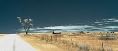 Ness County, Kansas (unknown quantity) Tags: tree sky fence road horizon cloudsstormssunsetssunrises shortgrassprairie haybales deterioration abandoned unpaintedwood infrared hss stopsign