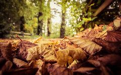 Fallen For Autumn (Glenn Cartmill) Tags: park autumn trees ireland brown green leaves canon eos october colours unitedkingdom glenn country fallen northernireland ulster fallenleaves loughgall 2015 cartmill 650d countryarmagh glenncartmill