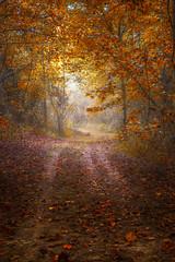 Autumn Walk (Elizabeth_211) Tags: autumn fall nature leaves forest woods path tennessee 6d jacksontn 24105mm westtn sherielizabeth