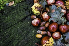 Autumnal decoration - acorns, chestnuts, buckeye, oak leaves on a wooden table. (LukasBeno) Tags: park wood november autumn winter food brown color colour tree green fall texture halloween nature fruit rural forest vintage garden season table design wooden leaf oak flora october colorful raw branch time background country seasonal decoration shell dry vegetable fresh september foliage chestnut copyspace nut tradition autumnal acorns buckeye ingredient