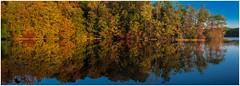 Burke Lake Sunrise (sorrellbruce) Tags: morning trees panorama lake fall ice forest morninglight still quiet fuji pano peaceful calm lakeside stitched refections warmlight thoreau burkelake windless fairfaxva fallmorning lr6 photoninja viveza fujinon23mm fujixt1 risefreefromcare