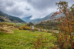 Tardor Tarter (Jordi TROGUET (Thanks for 1,923,800+views)) Tags: nature travels nikon otoño 1001nights jordi turismo andorra ovejas naturesfinest ovelles jtr canillo troguet jorditroguet 1001nightsmagiccity