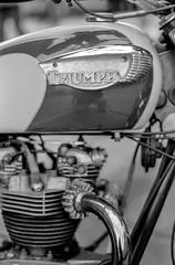 Triumph Tank (Gregory Heath) Tags: film triumph motorcycle spotmatic 50mmf14 kentmere100