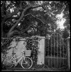 . (Vélocia) Tags: bessa66 kleinbessa skopar ilford hp5 rodinal voigtländer 6x6 babybessa vélo voigtlander