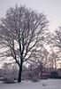 6713 (igor.meiden) Tags: latvia rigaregion sunrisetimeneartheshoreofthebalticsea towhichtheriverflowsinchupe20frostrarewintereffectboilsea латвия рижскийрайон времярассветауберегабалтийскогоморя вкотороевпадаетрекаинчупемороз20редкийзимнийэффектзакипающеемореwinter snow ice sky water sea pine river inchupe dawnзима снег лед небо вода море сосны река инчупе рассветriga mezapark treesinsnow sunsetsoon рига межапарк деревьявснегу скорозакат