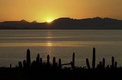Island Sunset (cowyeow) Tags: sundown sunset desert cacti cactus orange atmosphere color sea ocean camping landscape nature bajasur mexico baja bajacalifornia latinamerica vivid santacatalinaisland santacatalina