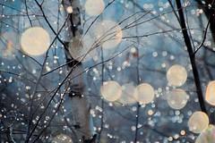 Twinkle (jeanmarie's photography) Tags: twinkle lights winter frozen droplets waterdroplets drops jeanmarieshelton jeanmarie nikond810 nature bokeh nikon