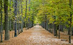 IMG_5647 (jorcolma) Tags: la granja palacio jardines fuentes segovia españa spain