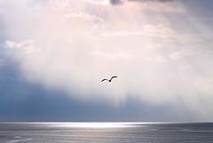 A sublime moment - Rain and light (die Augen) Tags: seascape ocean sky rain cloud clouds seagull inspirational canon sl1