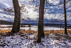 Trunks of trees and snow (tomaskriz1) Tags: branches grass blue clouds sun leaf brown white snow trunk plant outdoor forest landscape natural nature outdoors rural scene season tree trees moravian czech winter