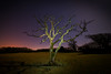 lighting up the tree (technodean2000) Tags: lighting up tree with torch stars night lightroom photo canvas cowbridge south wales uk