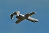 OA-10A Thunderbolt II 80-0194 (skyhawkpc) Tags: 2011 intheirhonorairshow colorado usarmy buttsarmyairfield baaf fortcarson fcs kfcs airshow allrightsreserved garyverver fairchildrepublic oa10a thunderboltii 800194 usaf 23rdfightergroup popeafb nikon d300