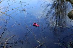 Pink croc (tommyajohansson) Tags: sverige sweden schweden suède suecia småland uppvidinge lenhovda tommyajohansson geotagged