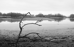 "[Read Description] ""Landscape"" [Read Description] (TARmAdAmA) Tags: newphotographer composition landscape reflection bw fuji x100 flickr nature netherlands"