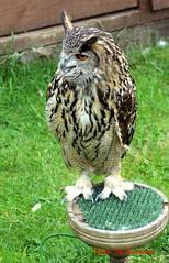 (56) Liberty's Owl Raptor & Reptile Centre