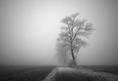 Foggy day (andrea.dusk) Tags: fog foggy winter frost fiel nature tree nikon tokina 1116mm