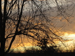 Trees At Sunrise. (dccradio) Tags: lumberton nc northcarolina robesoncounty sunrise tree trees silhouette morning goodmorning morningsky orange blue sky clouds nature