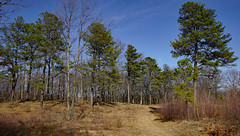 DSC02759 (dr.tspencer) Tags: abanypinebushpreserve albanyny trees pines naturepreserve landscape
