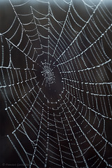 Tela de araña. / Spiderweb. (Recesvintus) Tags: teladearaña telaraña spiderweb nature waterdrops gotasdeagua naturaleza recesvintus albacete españa spain