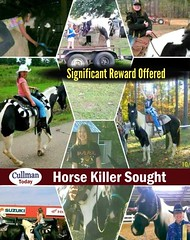 CULLMAN HORSE KILLER SOUGHT - Significant Reward Offered (cullmantoday) Tags: logan equine horse killer murder reward offered cullman county alabama