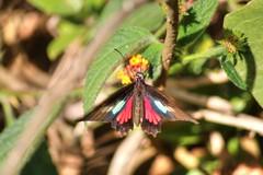 chaos theories (Rodrigo Alceu Dispor) Tags: flower macro butterfly chaos theory effect