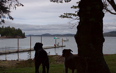 Another day another dog adventure (Hodgey) Tags: canada tree dogs silhouette river boats dock fishermen maine josh ralph stcroixriver lobsterboats